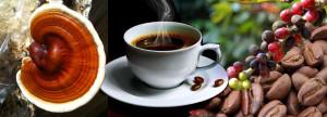 Cafe ganoderma en Peru