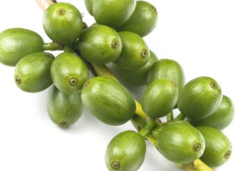 Cafe verde en peru para bajar de peso